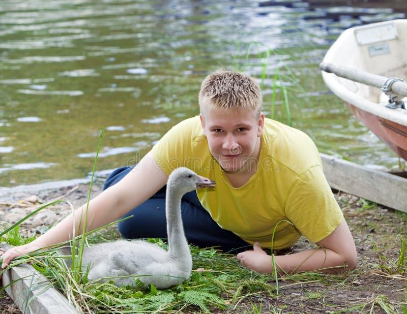 El adolescente cerca de un pájaro de bebé de un cisne en el banco del lago imágenes de archivo libres de regalías