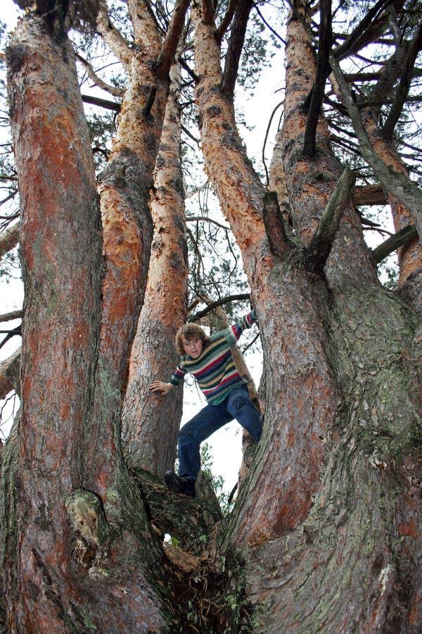 El adolescente está subiendo entre los árboles en la opinión inferior del bosque foto de archivo