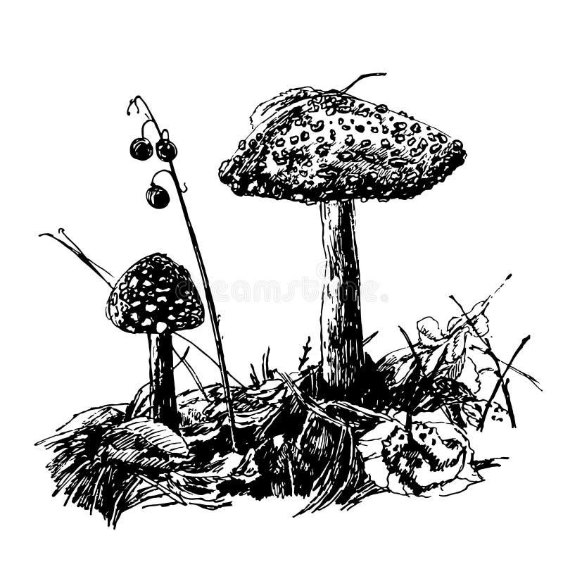 El agárico de la mosca del champiñón del dibujo, gráficos del bosquejo da el ejemplo exhausto de la tinta libre illustration