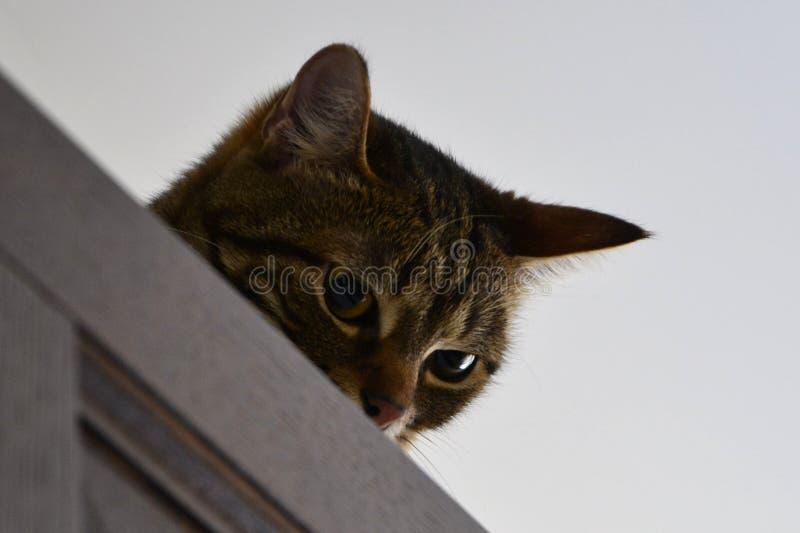 El agacharse y gato astuto fotografía de archivo