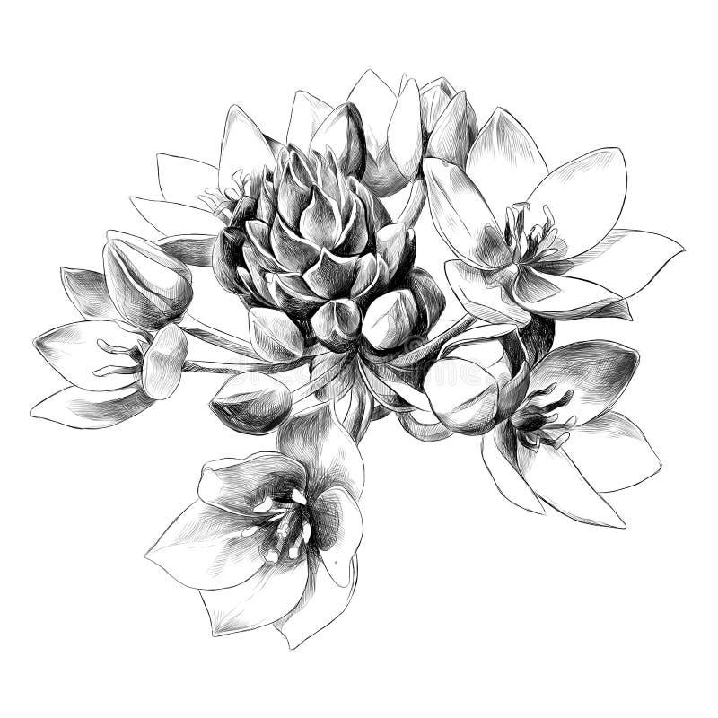 El agavo florece gráficos de vector del bosquejo stock de ilustración