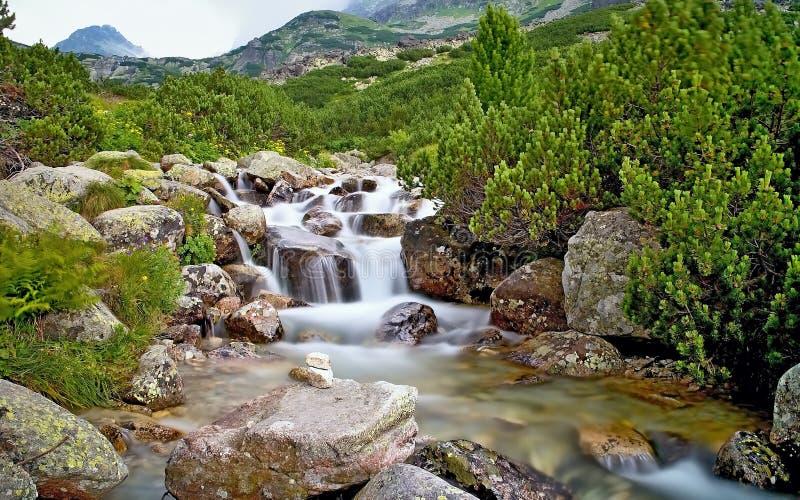 El agua de un río de la montaña con las rocas y enano-pino cerca de la cascada Skok en el alto Tatras Eslovaquia hermosa imagen de archivo