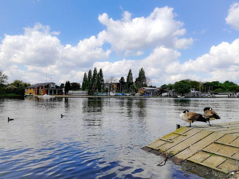 El agua del río Támesis Ducks las nubes del cielo de HDR del agua fotografía de archivo libre de regalías