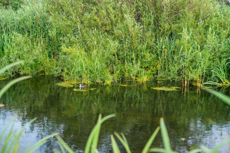 El agua encuentra siempre su manera a través de la naturaleza fotos de archivo libres de regalías