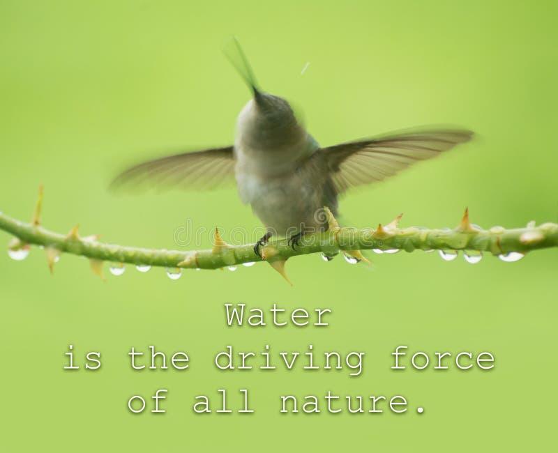 El agua es la fuerza impulsora de toda la naturaleza - cite con un colibrí fotos de archivo libres de regalías