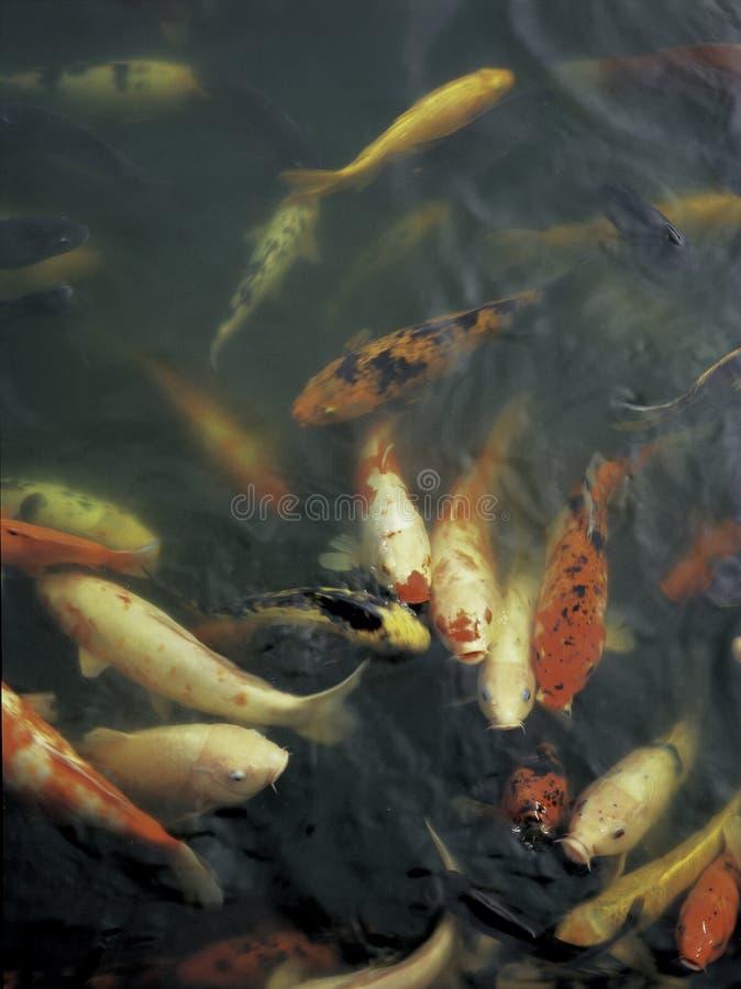 El agua exult los pescados foto de archivo
