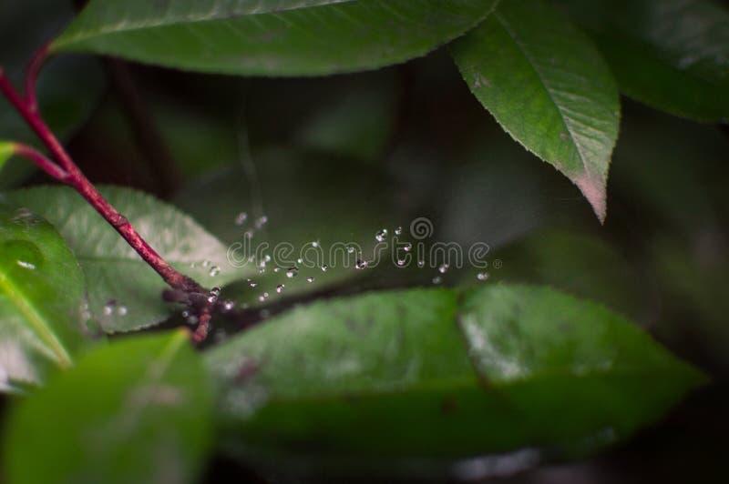 El agua flota en un Spider& x27; web de s fotos de archivo libres de regalías