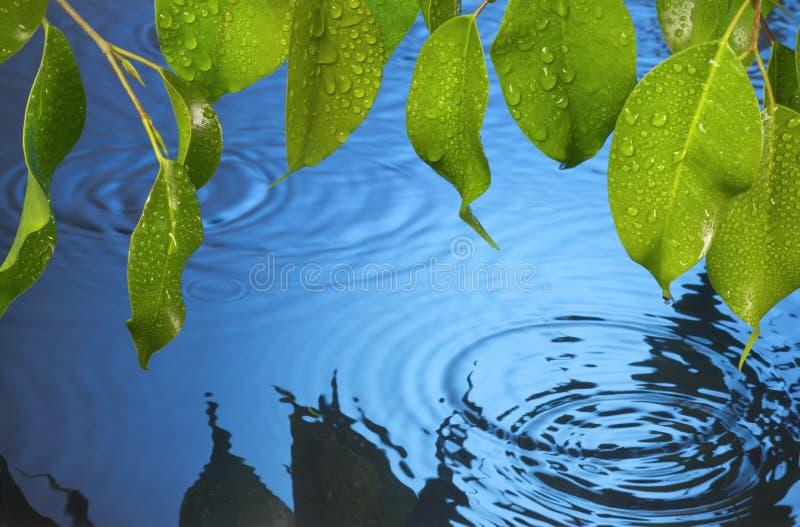 El agua ondula el fondo de la lluvia de las hojas