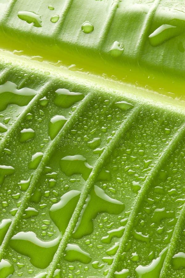 El agua verde cae el fondo de la hoja imagenes de archivo