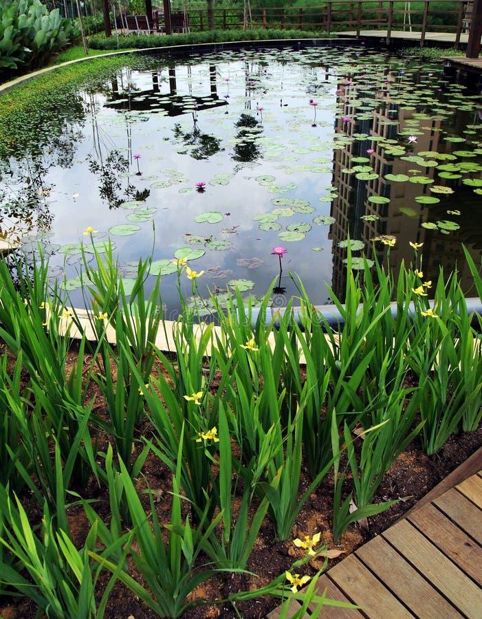 El ajardinar natural del agua del condominio imagen de archivo