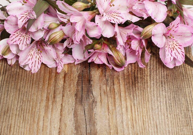 El Alstroemeria florece (lirio peruano o lirio de los incas) encendido corteja imagenes de archivo