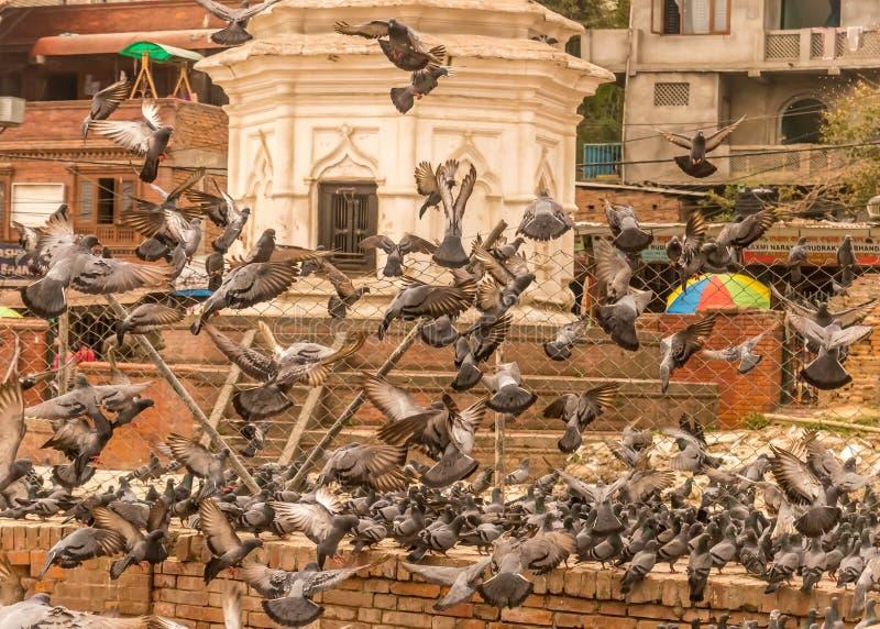 El alzarse de palomas imagenes de archivo