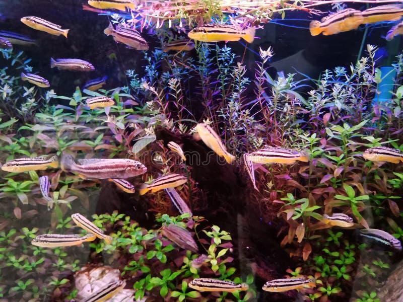 El alzarse de pescados, de modo que la belleza esté para siempre imagen de archivo libre de regalías