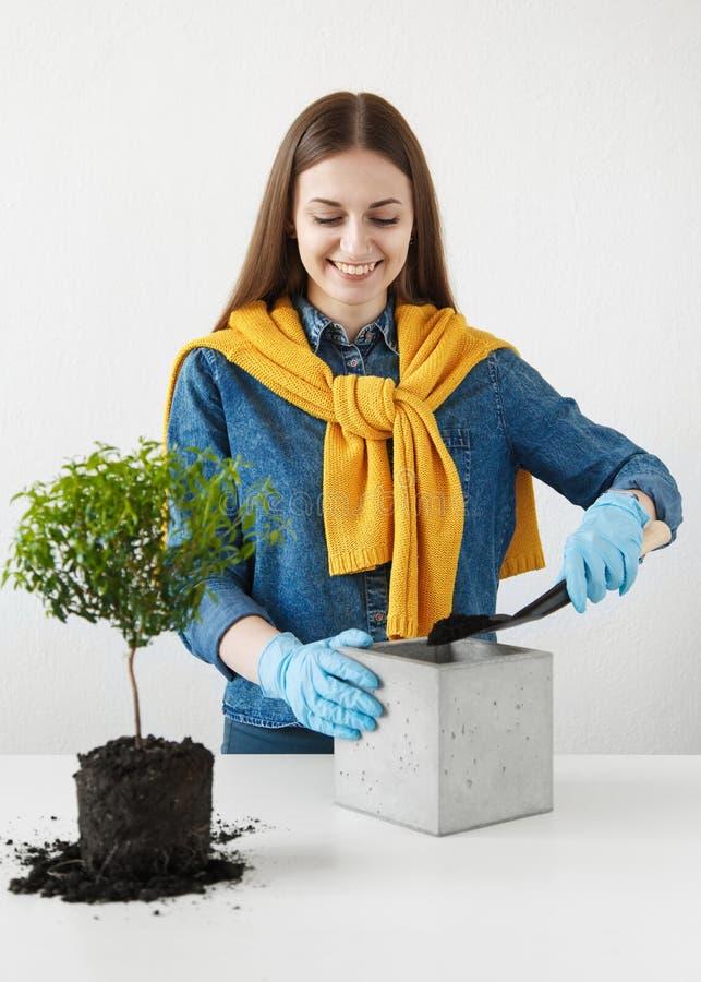 El ama de casa atractiva planta una planta fotografía de archivo