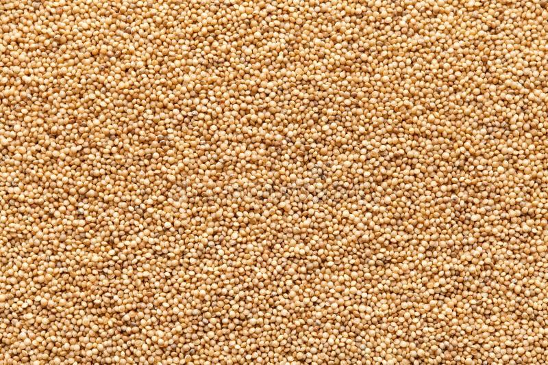 El amaranto del primer siembra el alimento biológico fotos de archivo libres de regalías