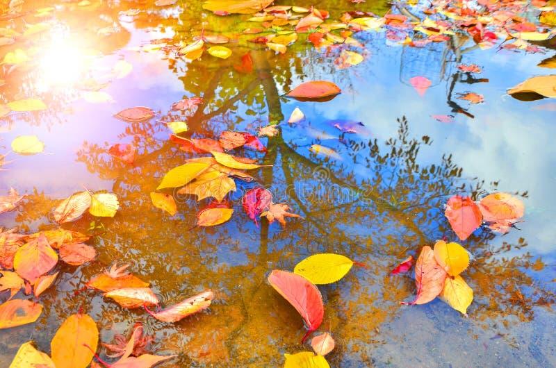 El amarillo de oro del otoño se va en la reflexión de la superficie del agua imagen de archivo