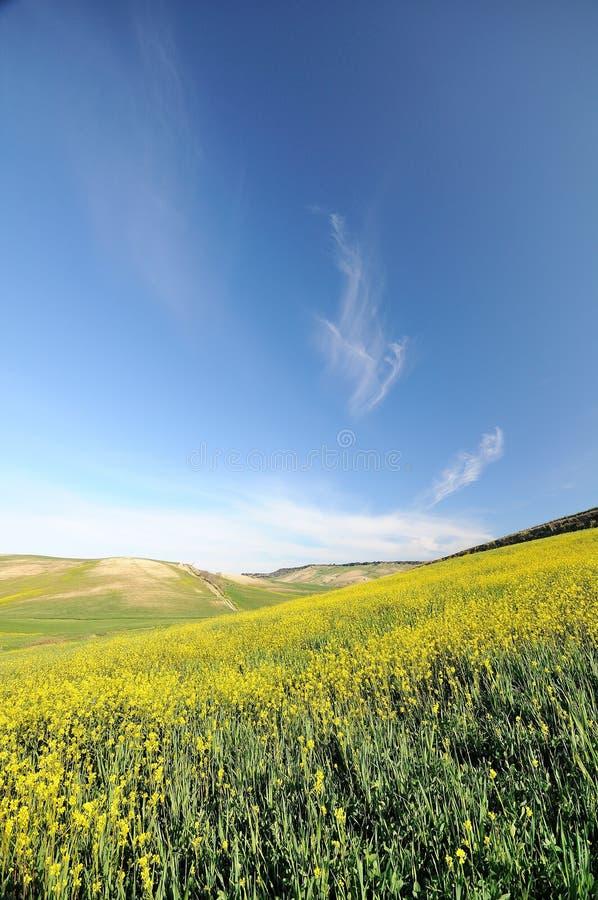 El amarillo florece la colina bajo el cielo nublado azul imagen de archivo libre de regalías