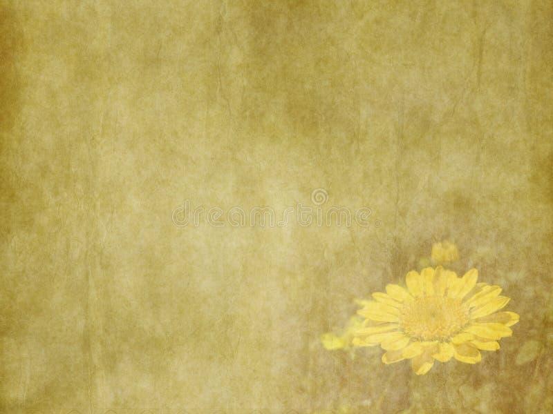 El amarillo hermoso del verano del vintage florece la tarjeta del día de fiesta en viejo fondo de papel amarillo stock de ilustración