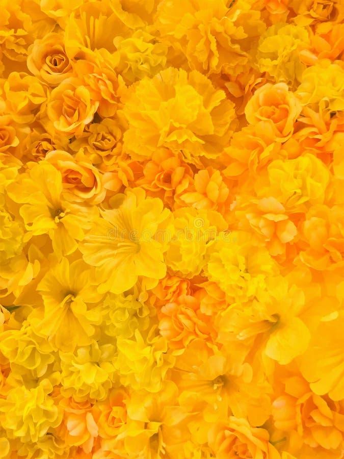 El amarillo hermoso florece el fondo Flor del fondo imagen de archivo libre de regalías
