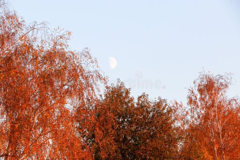 El amarillo se va contra un cielo azul en una mañana del otoño imagen de archivo