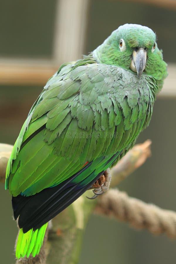 El Amazonas harinoso fotos de archivo libres de regalías