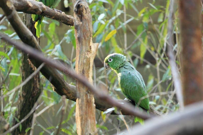 El Amazonas harinoso imágenes de archivo libres de regalías