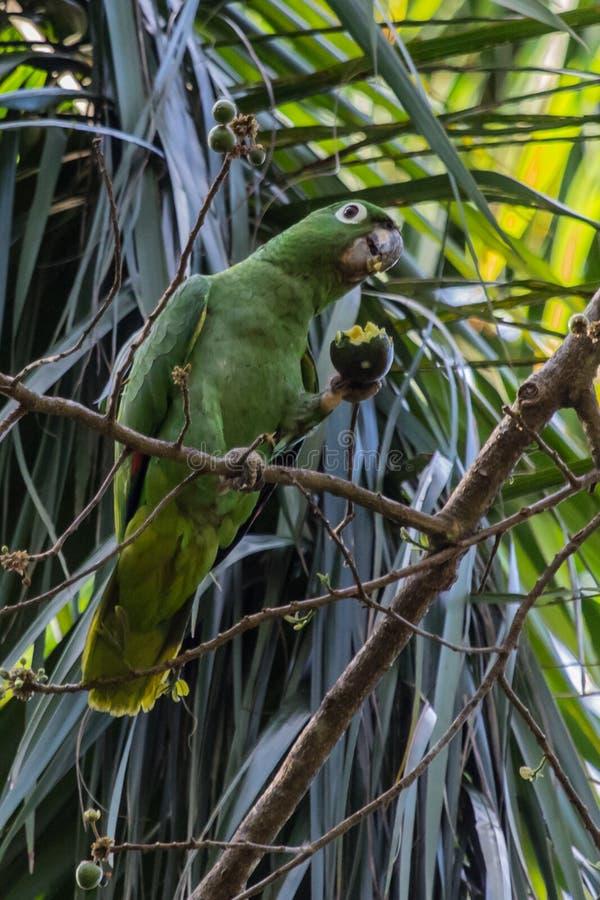 El Amazonas harinoso fotografía de archivo