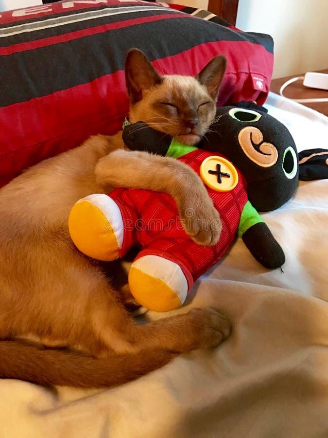 El amor es un gatito el dormir que el gato que abraza el peluche refiere la cama imagenes de archivo