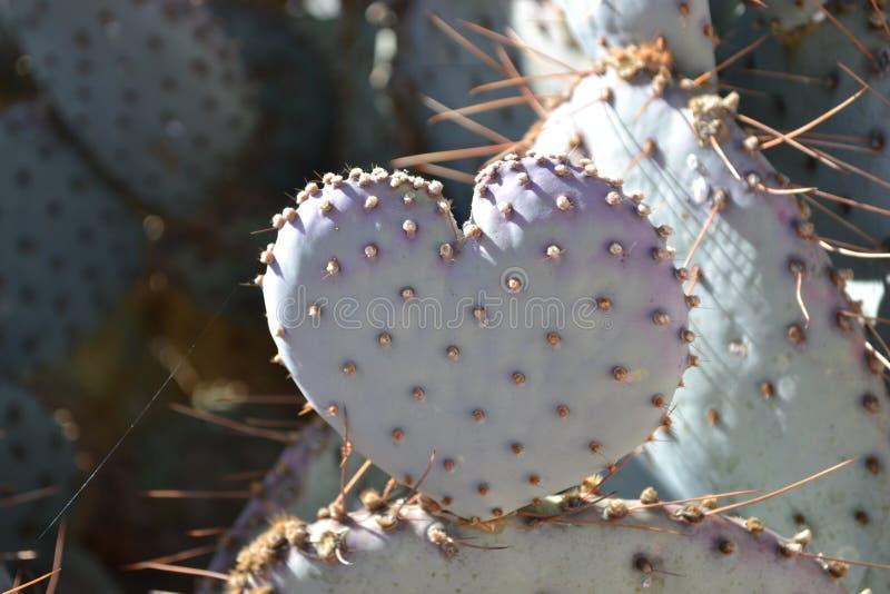 El amor es un higo chumbo imagen de archivo
