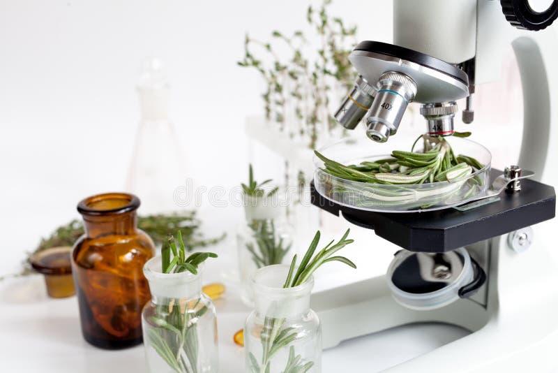 El análisis de los pesticidas de la comida comprueba el romero en laboratorio imagen de archivo