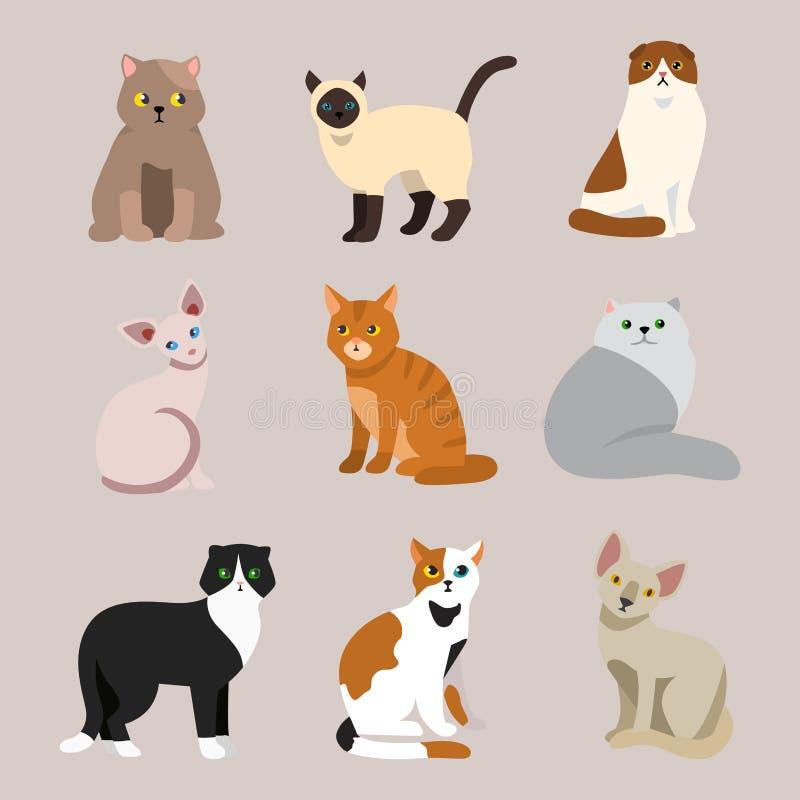 El animal adorable joven mullido de la historieta del retrato lindo del animal doméstico de la raza del gato y la diversión bonit stock de ilustración