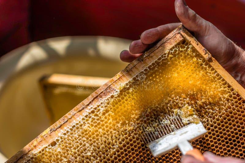 El apicultor está destapando el panal con la bifurcación especial imágenes de archivo libres de regalías