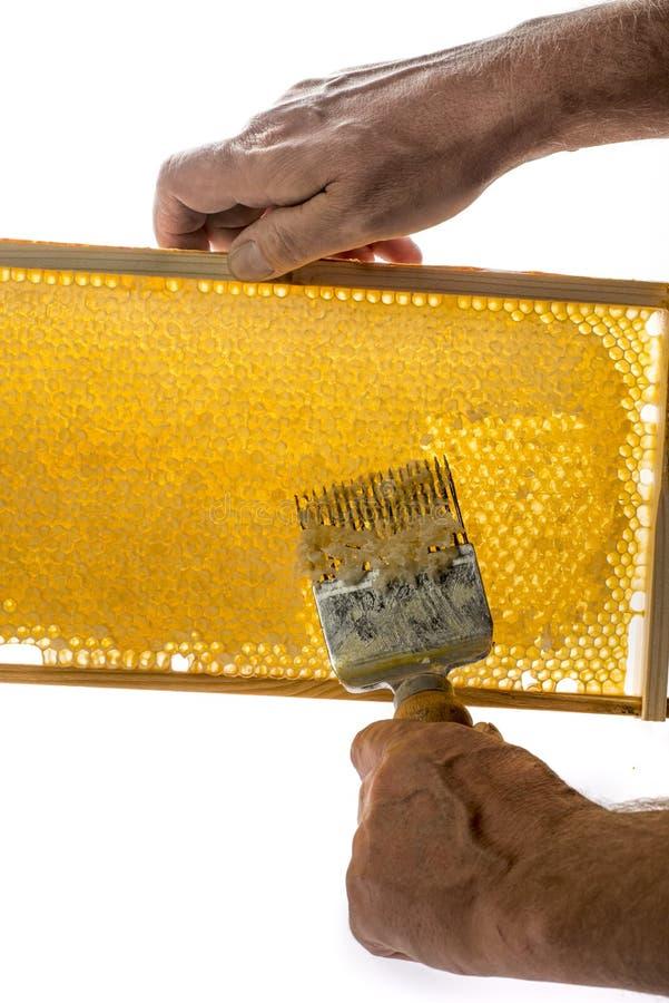 El apicultor está destapando el panal imagen de archivo libre de regalías