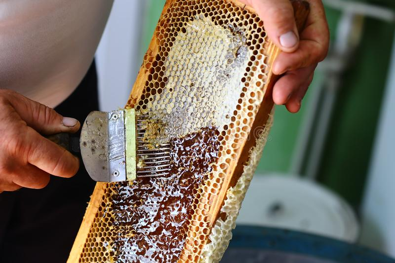 El apicultor está destapando el panal con destapar la bifurcación fotografía de archivo libre de regalías