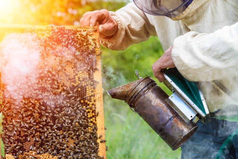 El apicultor fuma el humo de las abejas que se sientan en una célula de la miel Beesmoker Trabajo sobre un colmenar Apicultura fotografía de archivo