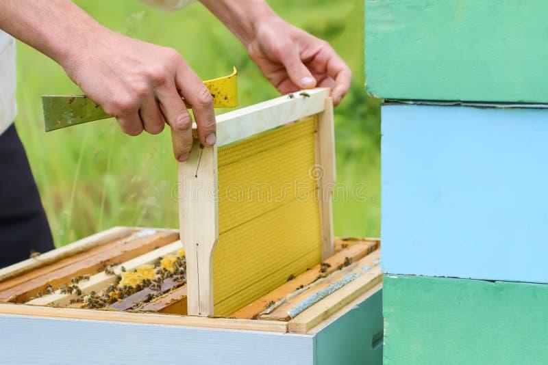 El apicultor pone un panal en la colmena Trabajo sobre un colmenar Apicultura imágenes de archivo libres de regalías