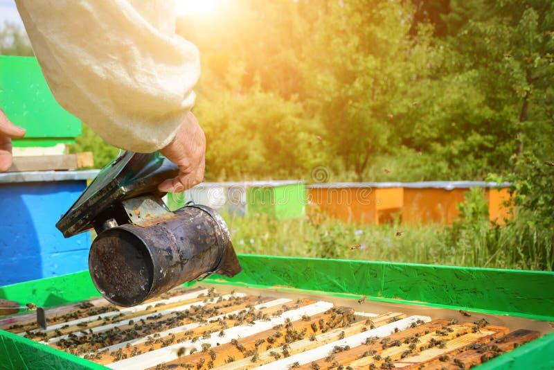 El apicultor trabaja en un colmenar cerca de una colmena abierta Concepto de apicultura apiary imagen de archivo libre de regalías