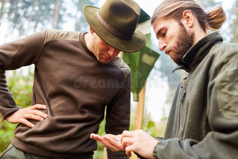 El aprendiz y el silvicultor examinan la trampa del escarabajo de corteza imagenes de archivo