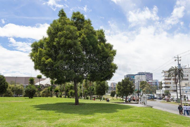 El Arbolito公园基多厄瓜多尔南美 免版税库存照片
