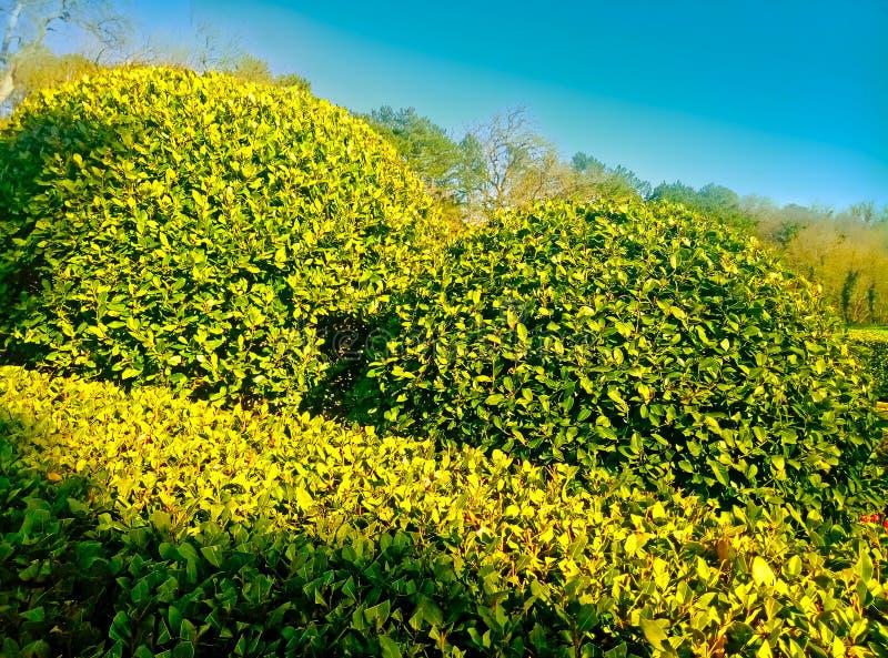 El arbusto acortó en un día soleado imagen de archivo libre de regalías