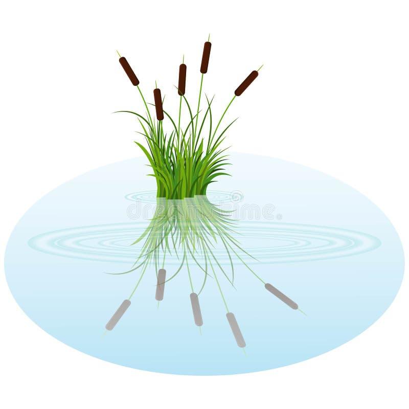 El arbusto del vector recubre con caña en el agua Las cañas reflejaron en el agua del lago con las rondas stock de ilustración
