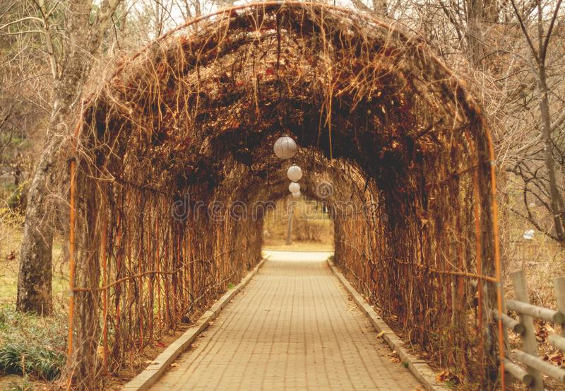 El arco de la pérgola de la manera, arcada, en otoño fotos de archivo libres de regalías