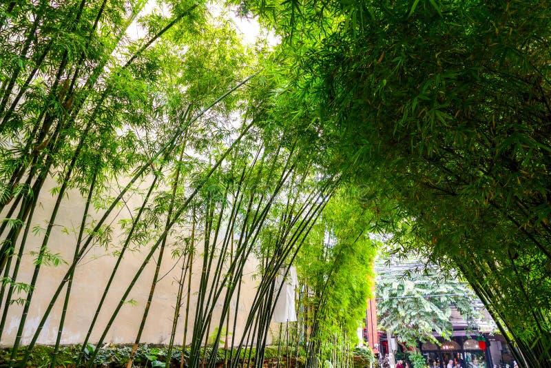 El arco del bambú foto de archivo