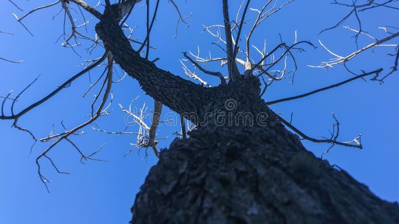 El arovore seco y el cielo azul fotos de archivo libres de regalías