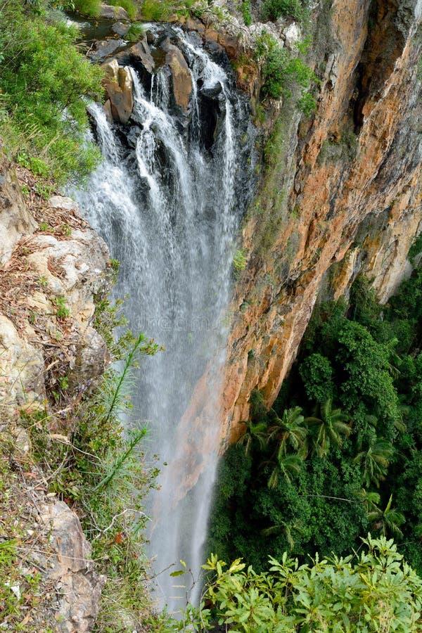 El arroyo murmurante cae en el parque nacional de Springbrook, Australia imagenes de archivo