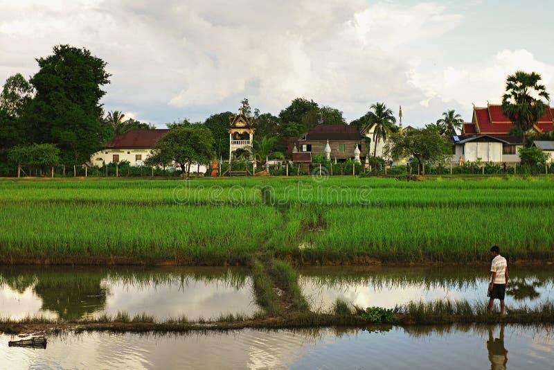 el arroz coloca con un pueblo y un monasterio en el fondo fotos de archivo