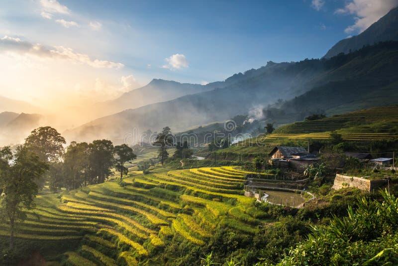El arroz coloca en colgante en puesta del sol en Sapa, Lao Cai, Vietnam imágenes de archivo libres de regalías