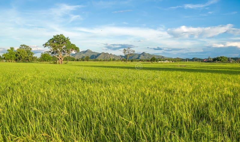 El arroz coloca Kanchanaburi, Tailandia fotos de archivo libres de regalías