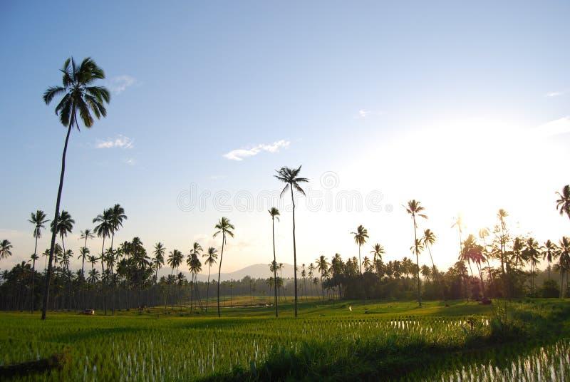 El arroz coloca Kotamobagu fotos de archivo libres de regalías