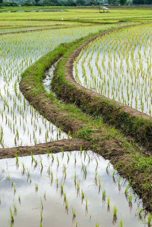El arroz de la terraza coloca en la montaña en Chiang Mai, Tailandia imagen de archivo